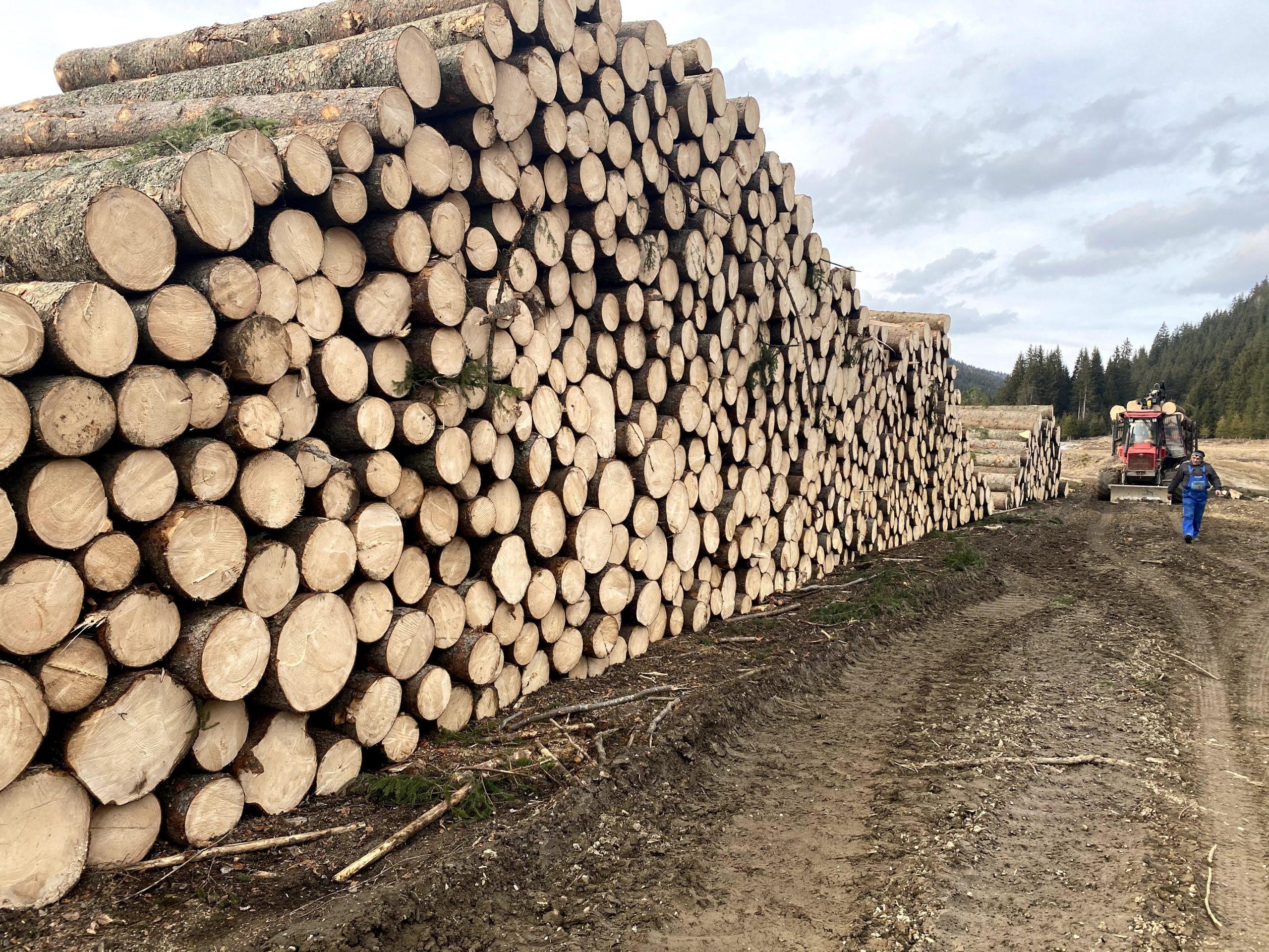 rönkfa értékesítése és szállítása